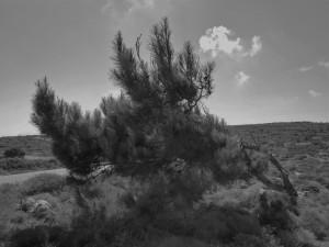 κοντρά στον άνεμο που σμιλεύει οτιδηποτε πάνω στο νησί